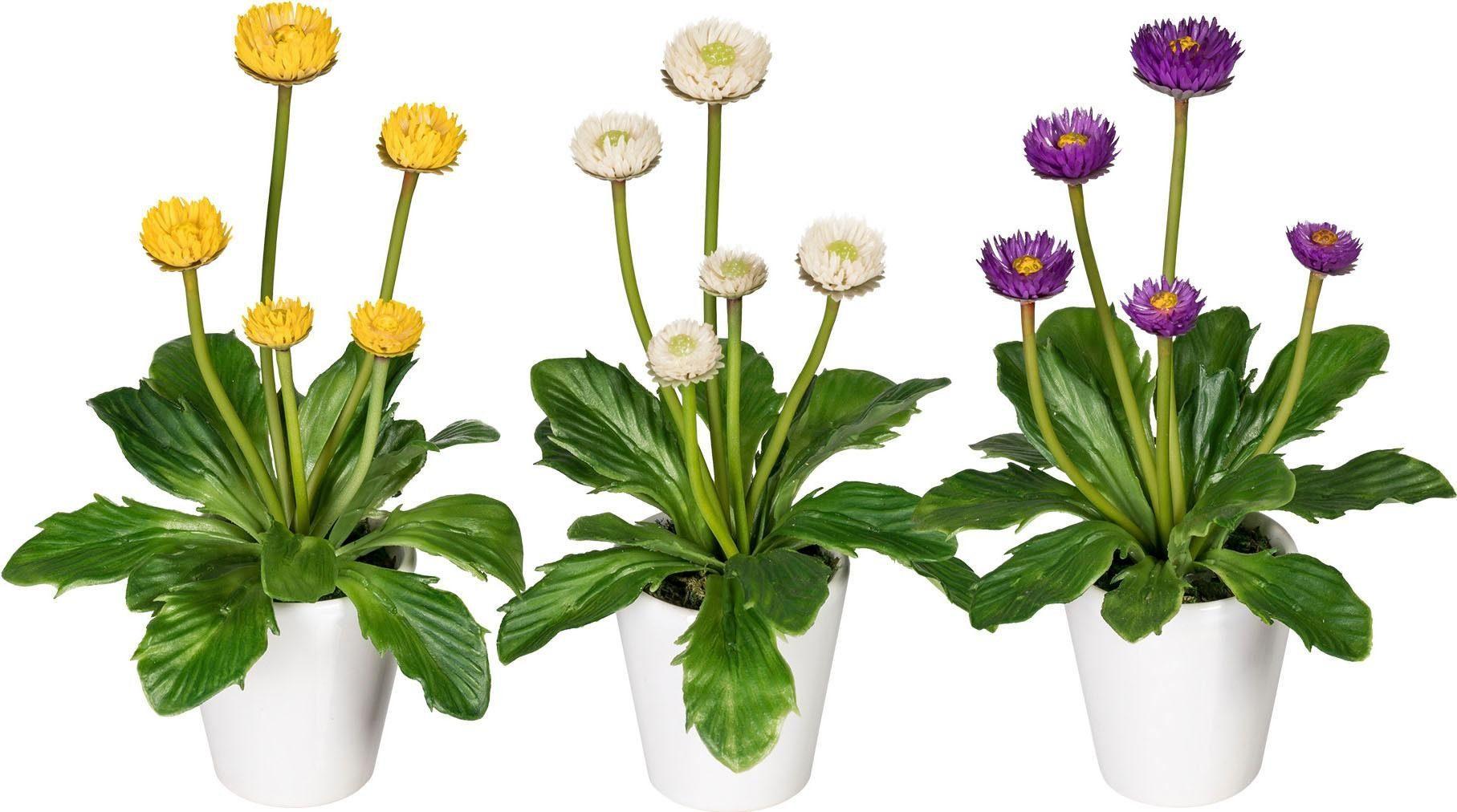 Künstliche Zimmerpflanze »Mini-Bellies« (3er-Set)