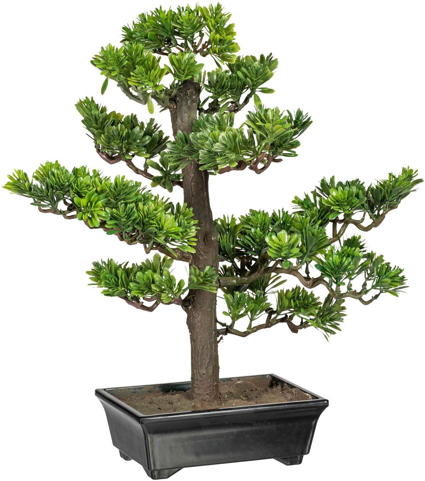 Kunstbonsai »Bonsai Podocarpus« x9, ca. 43 cm