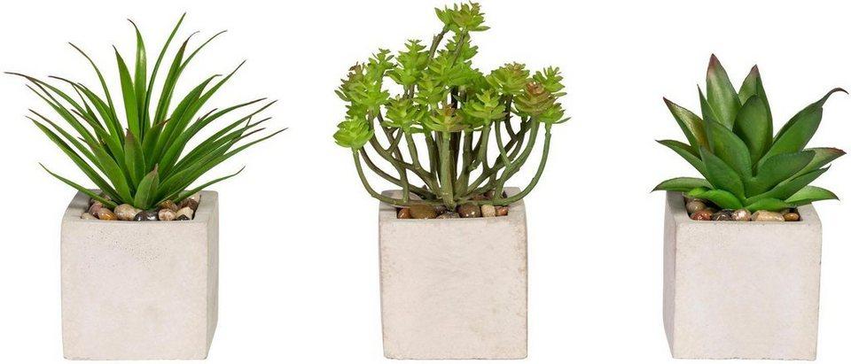 Künstliche Zimmerpflanze Sukkulenten ca 14 17 cm (3er Set) online kaufen OTTO ~ 01004223_Sukkulenten Als Zimmerpflanze