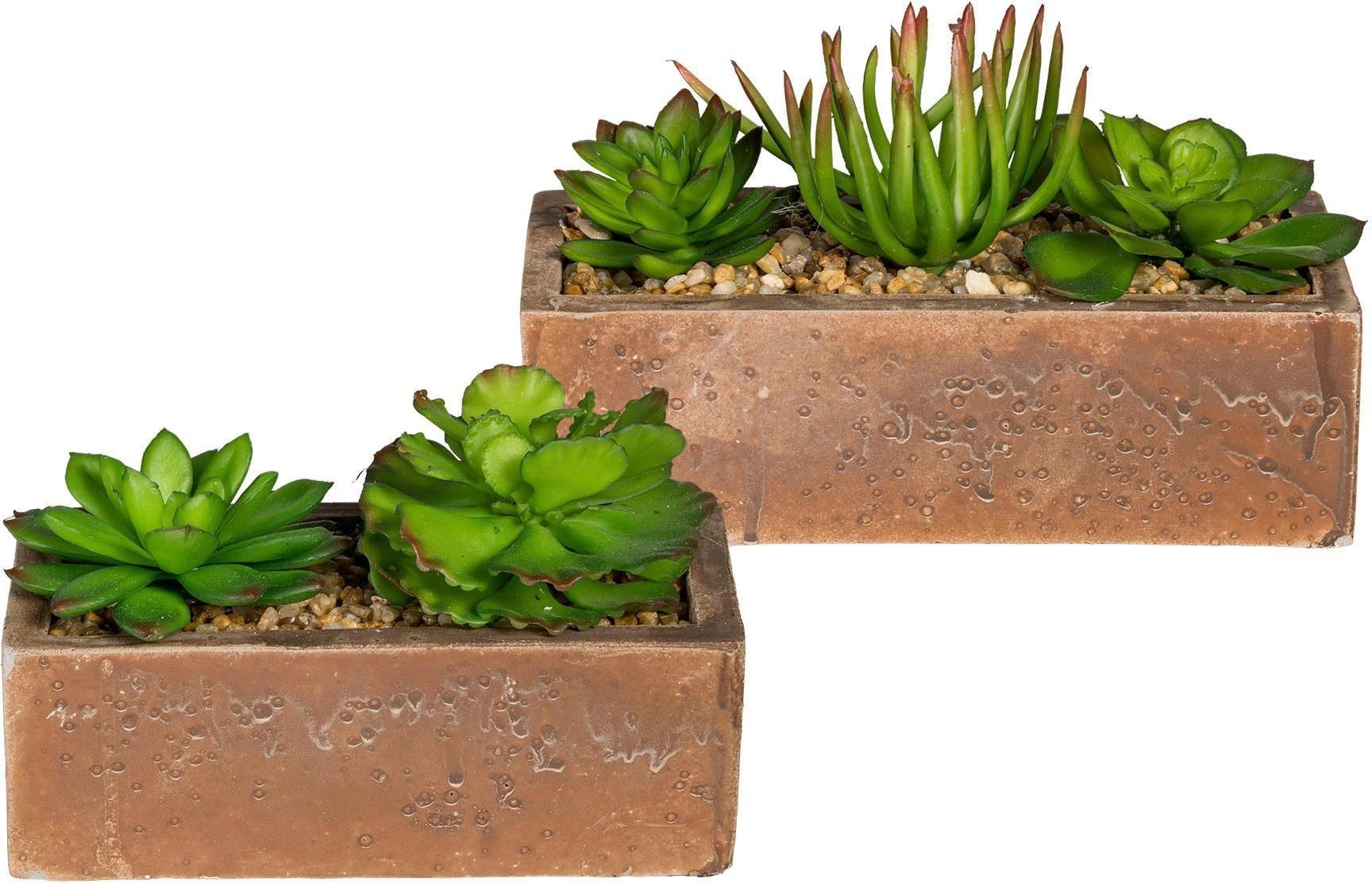 Künstliche Zimmerpflanze »Sukkulenten« (2er-Set)