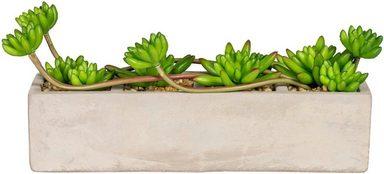 Kunstpflanze »Echeveriaarrangement«