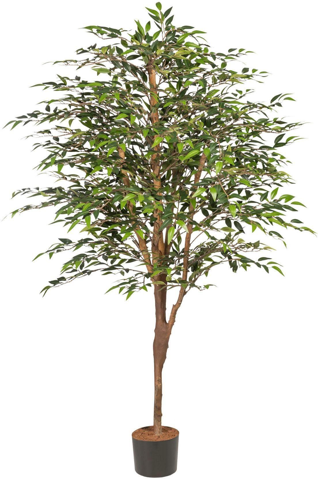 Kunstbaum »Ficus Benjamini«, ca. 180 cm, grün