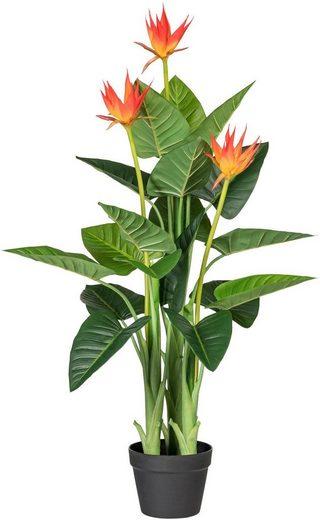 Kunstpflanze »Guzmania«, Creativ green, Höhe 105 cm