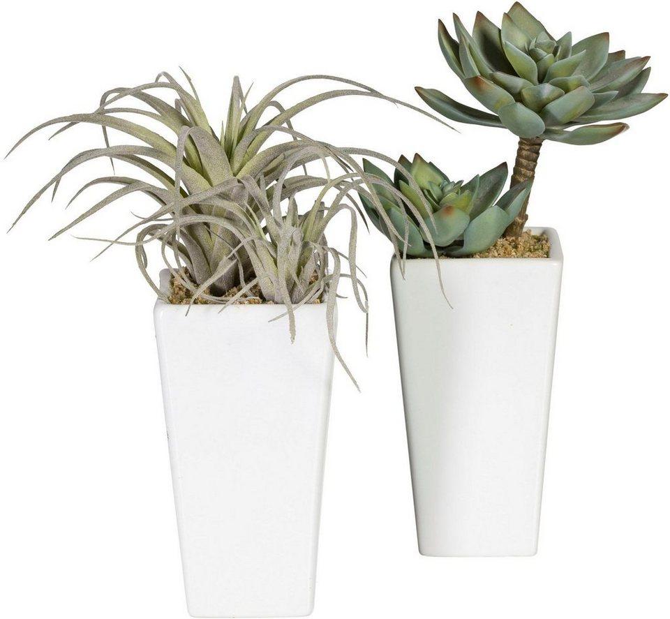 Künstliche Zimmerpflanze Sukkulenten , ca 23 cm (2er Set) online kaufen OTTO ~ 01004223_Sukkulenten Als Zimmerpflanze