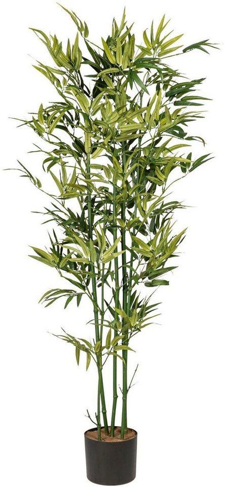 Kunstliche Zimmerpflanze Bambus X5 Ca 150 Cm Grun Online Kaufen