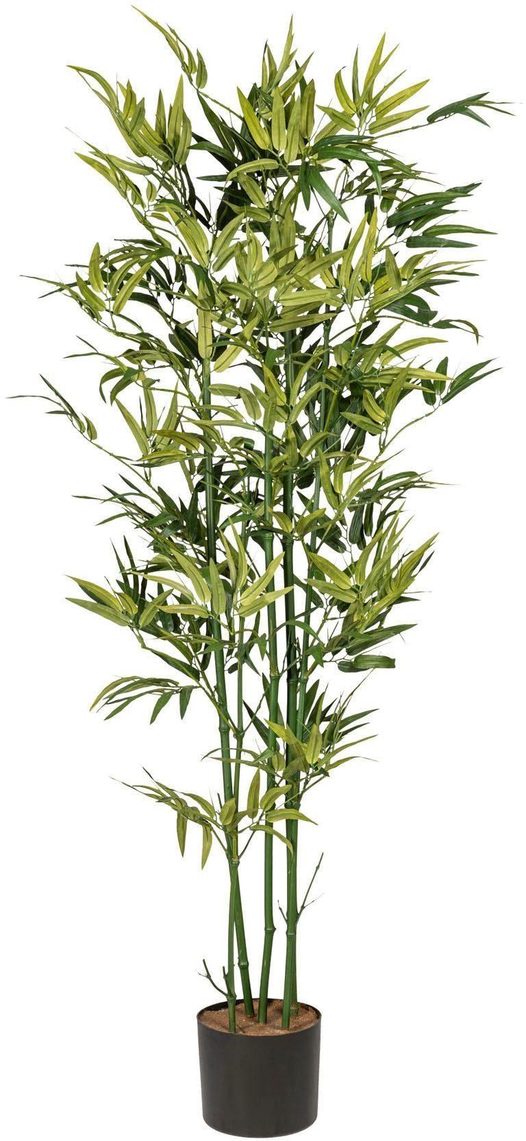 Künstliche Zimmerpflanze »Bambus« x5, ca. 150 cm, grün