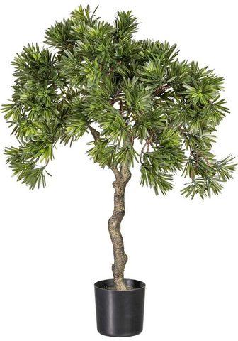 Dirbtinis augalas »Podocarpus«