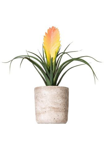 Dirbtinis augalas »Tillandsie Soledo«