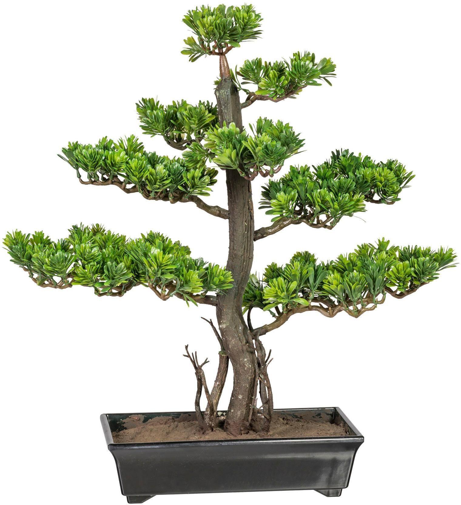Kunstbonsai »Bonsai Podocarpus« x8, ca. 50 cm