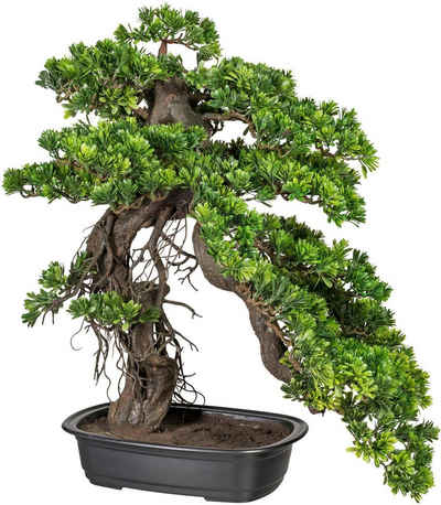 Kunstbonsai »Bonsai Podocarpus« Bonsai, Creativ green, Höhe 65 cm