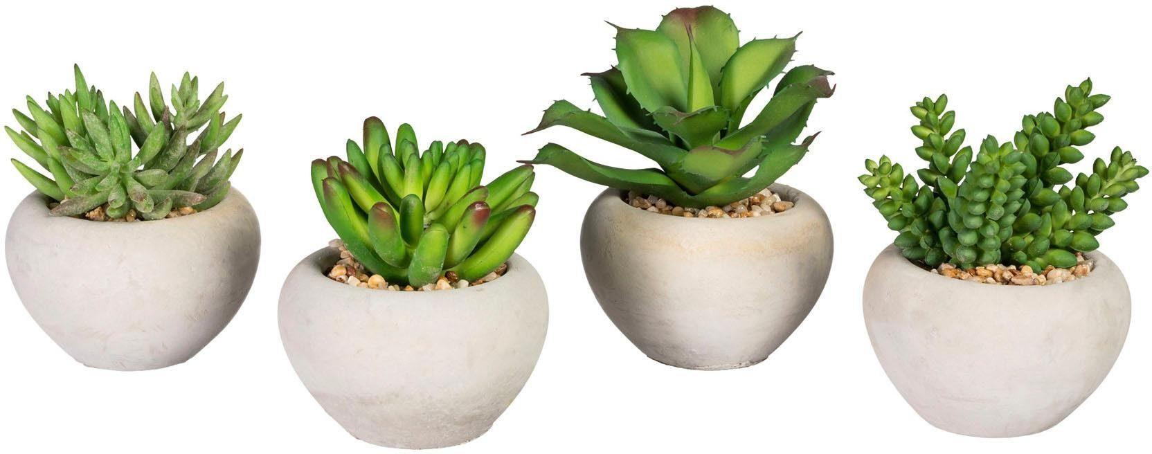 Künstliche Zimmerpflanze »Sukkulenten«, 9-12 cm (4er-Set)