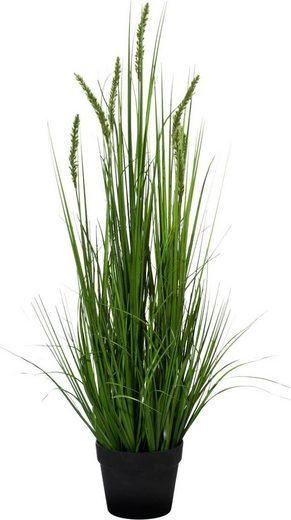 Kunstpflanze »Penisetum«