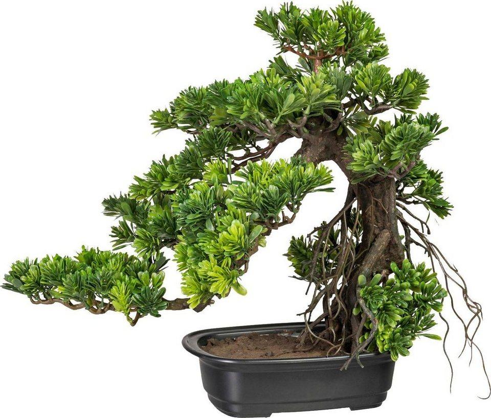 kunstpflanze bonsai podocarpus  kaufen otto