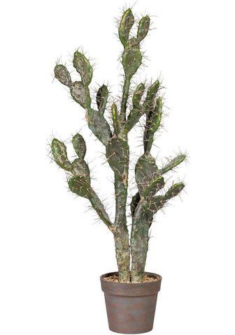 Dirbtinis augalas »Kaktus Opuntie«