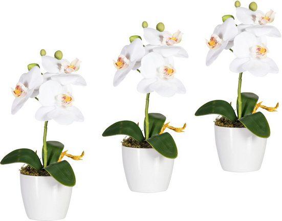 Kunstorchidee »Phalaenopsis« (Set, 3 Stück)