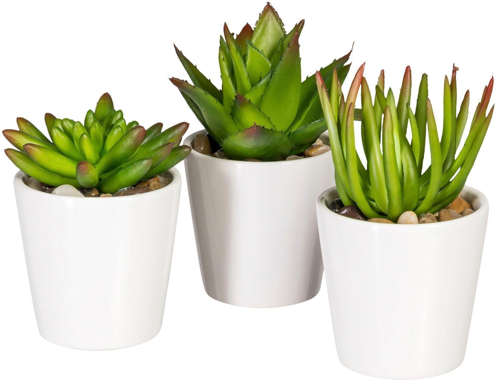 Pflanzen online kaufen Möbel Suchmaschine ladendirekt de ~ 01004223_Sukkulenten Als Zimmerpflanze