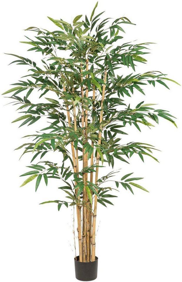 Bambus Pflanzen Online Kaufen Mobel Suchmaschine Ladendirekt De