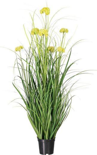 Kunstpflanze »Grasbusch cardaria«