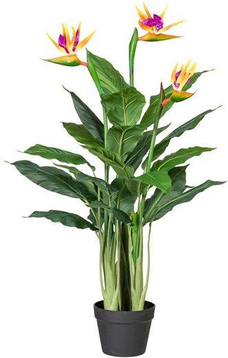 Kunstpflanze »Strelitzie«, Creativ green, Höhe 100 cm