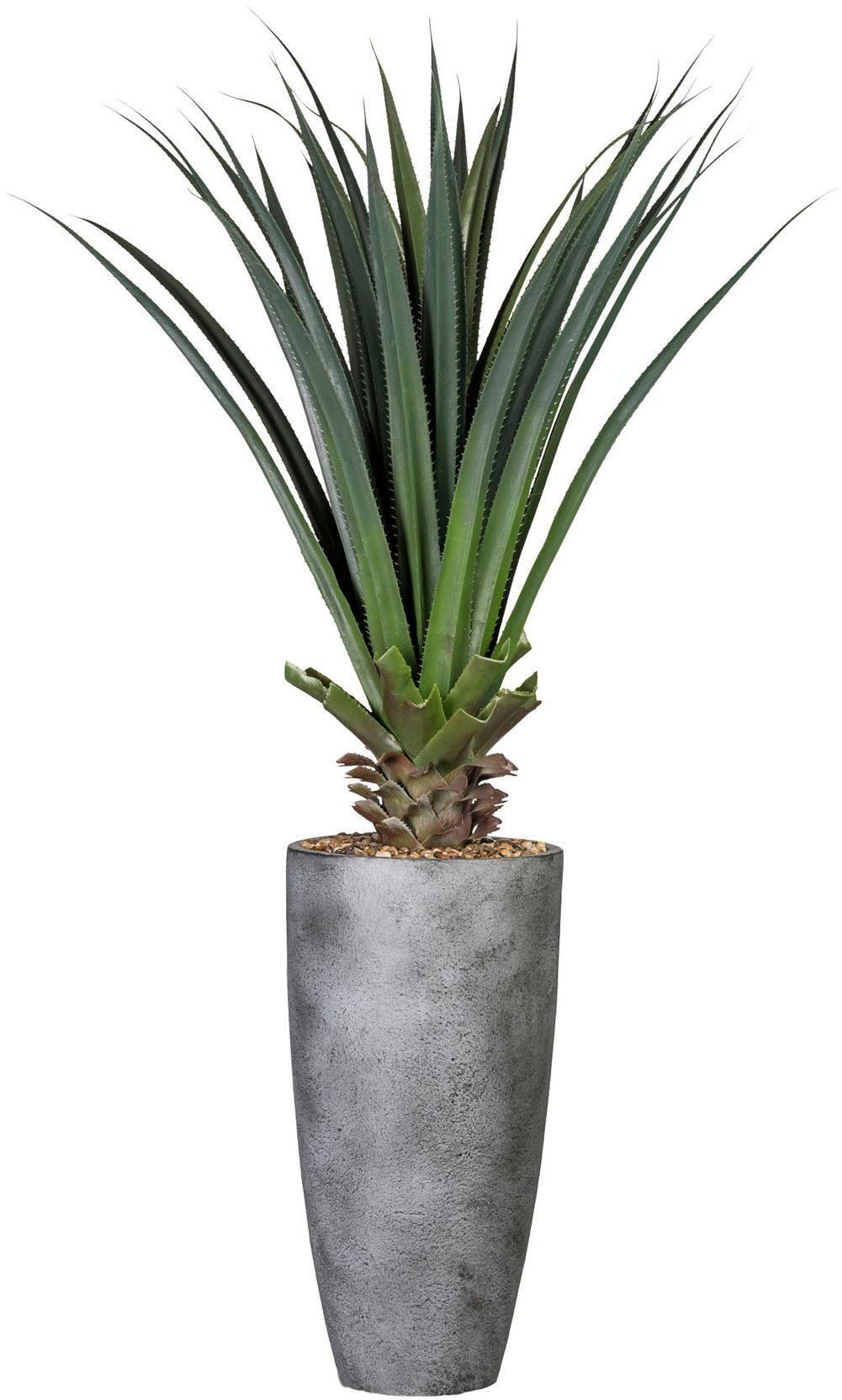 Künstliche Zimmerpflanze »Aloe«, ca. 150 cm grün