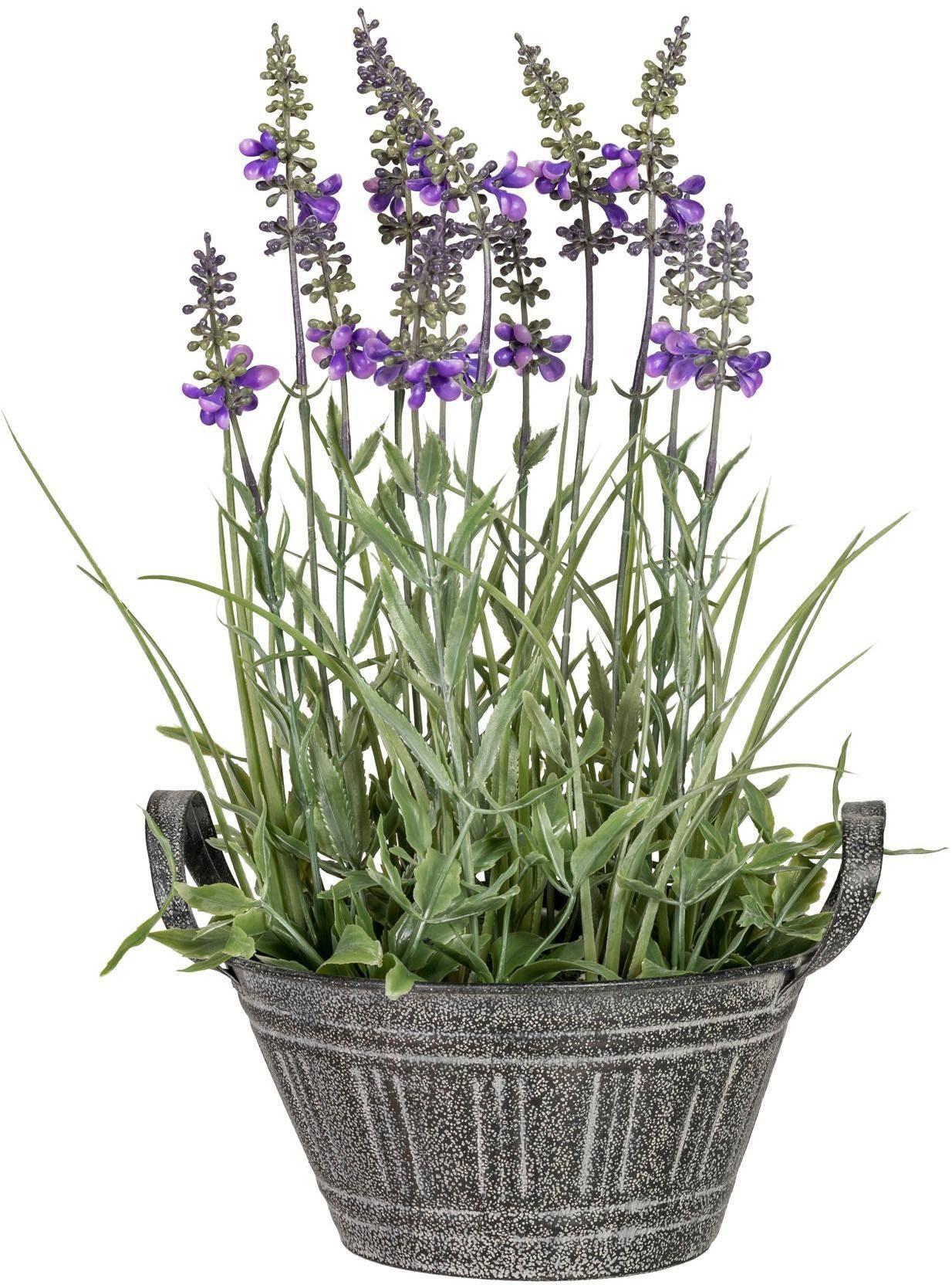 Künstliche Zimmerpflanze »Lavendel« x12, ca. 33 cm