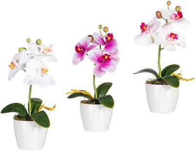 Kunstpflanze »Phalaenopsis« Orchidee, Creativ green, Höhe 24 cm
