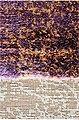 Läufer »Maya 3820«, Sehrazat, rechteckig, Höhe 11 mm, Kurzflor, Patchwork Optik, Bild 3