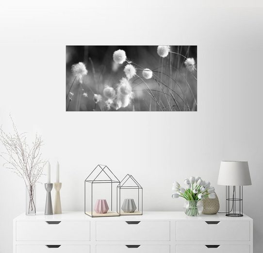 Posterlounge Wandbild - Julia Delgado »Wollgras schwarzweiß«