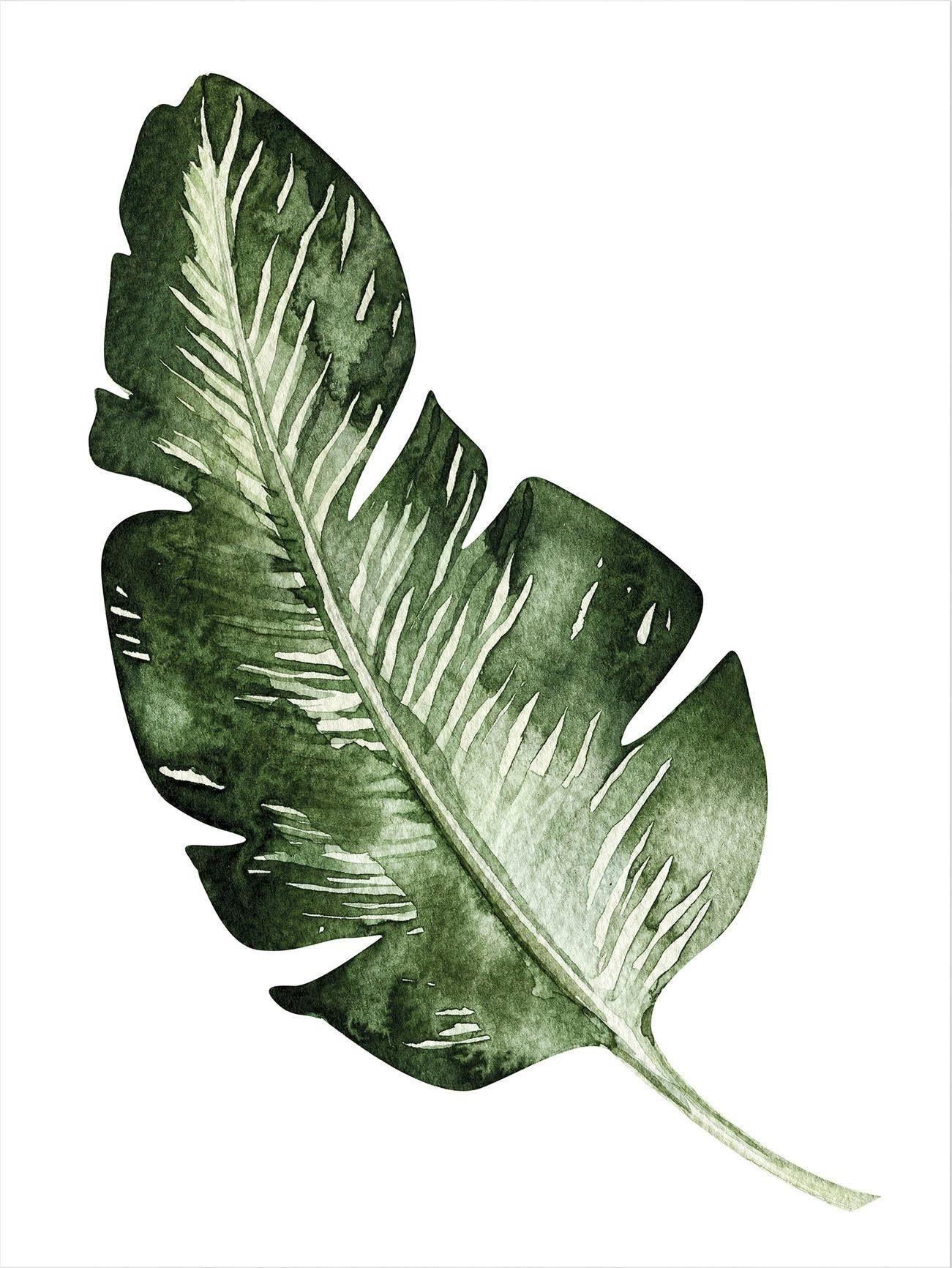 Poster »Kvilis - Banana Leaf« 50/60 cm