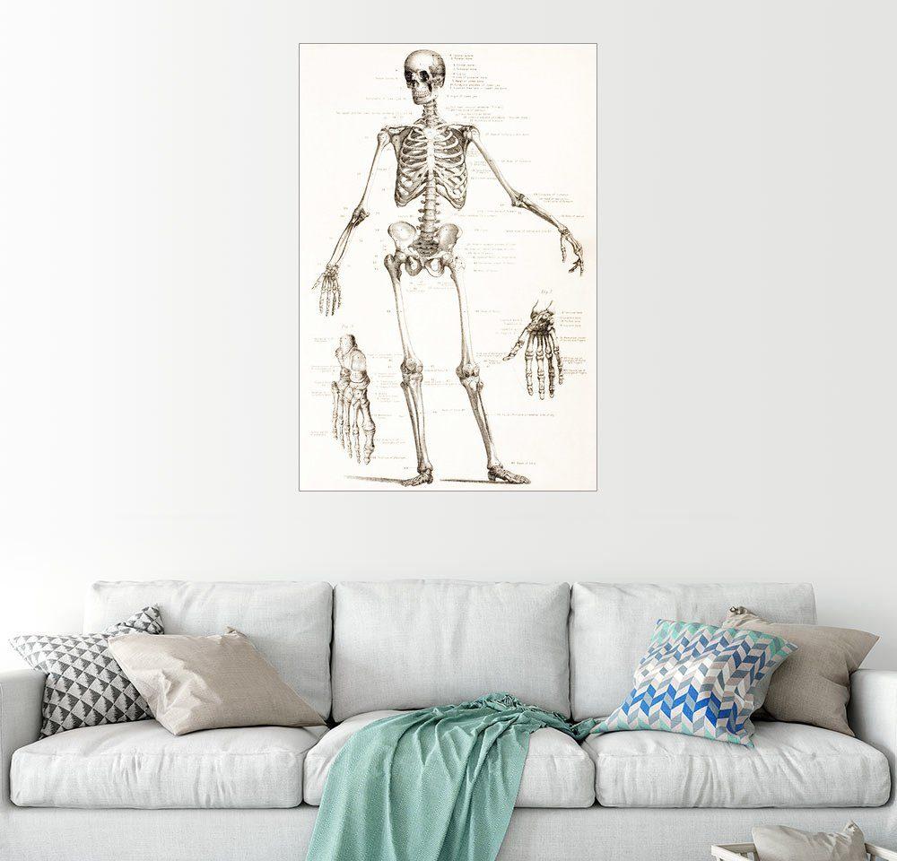 Posterlounge Wandbild - Ken Welsh »Das menschliche Skelett«