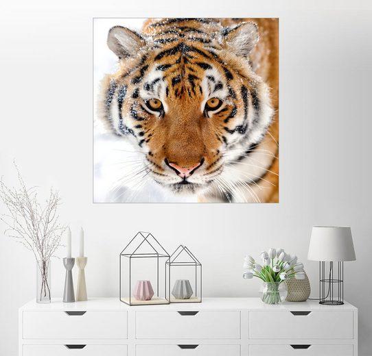 Posterlounge Wandbild »Sibirischer Tiger im Schnee«