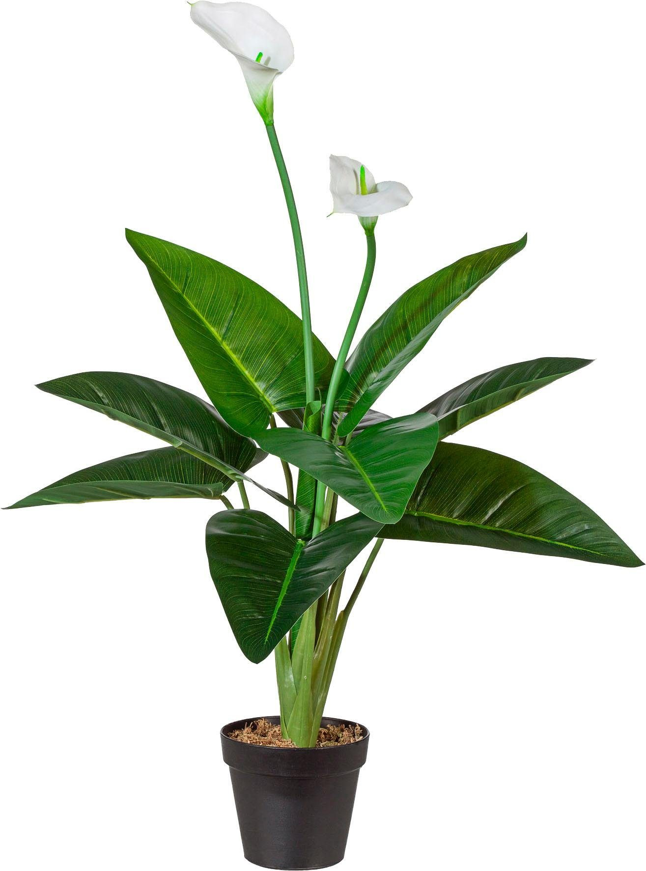 Künstliche Zimmerpflanze Höhe 70 cm