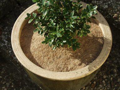 NOOR Kokosscheibe , Ø 25 cm, 4 Stück