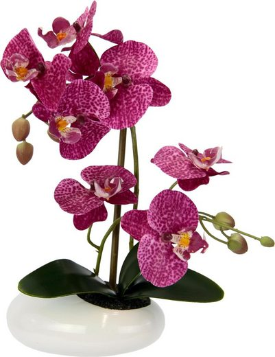 Kunstpflanze »Phalaenopsis in Schale«