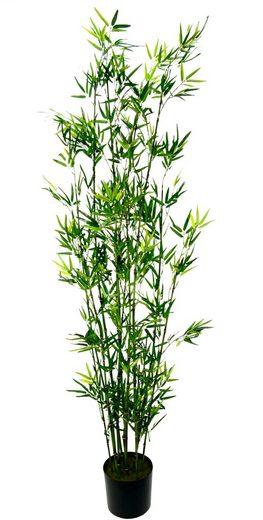 Kunstpflanze »Bambus im Topf« Bambus, I.GE.A., Höhe 180 cm