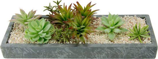 Kunstpflanze »Succulenten in Schale« Succulente, I.GE.A., Höhe 9 cm
