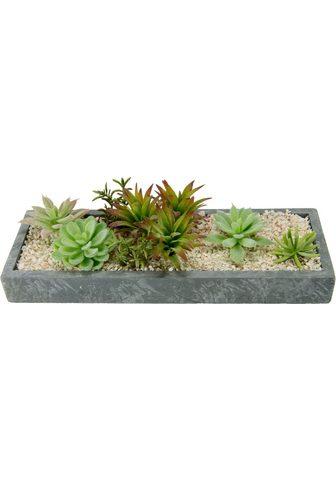 Dirbtinis augalas »Succulenten in Scha...