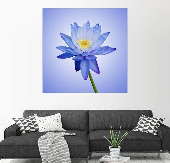 Posterlounge Wandbild »Blaue Wasserlilie«