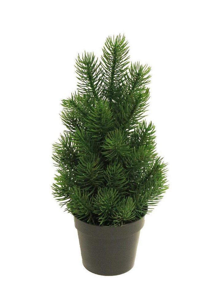 Edel tannenbaum rory im topf 32 cm hoch kaufen otto - Tannenbaum im topf kaufen ...