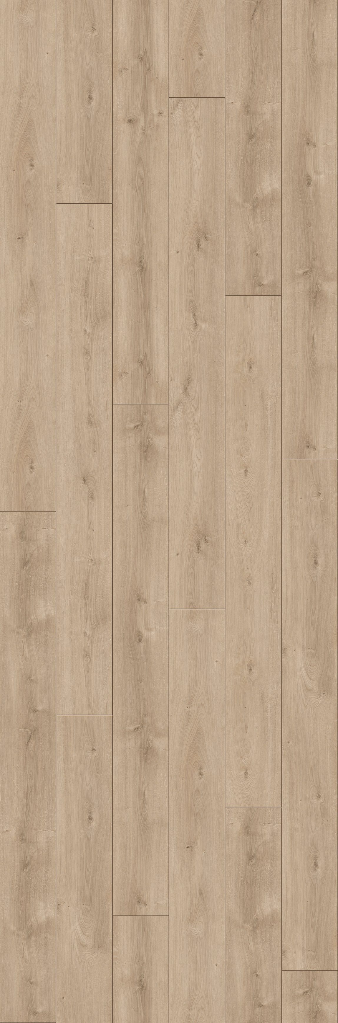 PARADOR Laminat »Trendtime 6 - Eiche Avant«, 2200 x 243 mm, Stärke: 9 mm