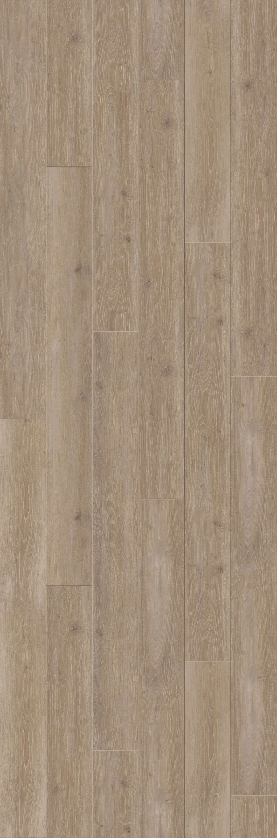 PARADOR Laminat »Trendtime 6 - Eiche Skyline perlgrau«, 2200 x 243 mm, Stärke: 9 mm