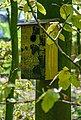 dobar Nistkasten »Meisenkasten Fagus sylvatica«, BxTxH: 15,5x14,5x30 cm, Bild 3
