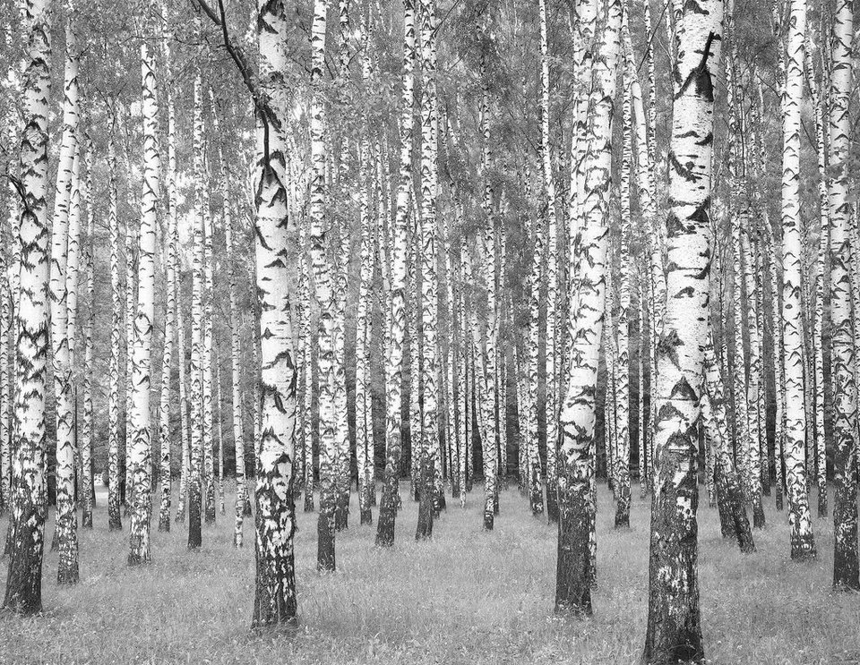 fototapete living walls birkenwald vlies glatt online kaufen otto. Black Bedroom Furniture Sets. Home Design Ideas