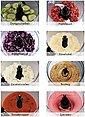 Gastroback Kompakt-Küchenmaschine Design Food Processor Advanced 40965, 1100 W, 2 l Schüssel, Bild 15