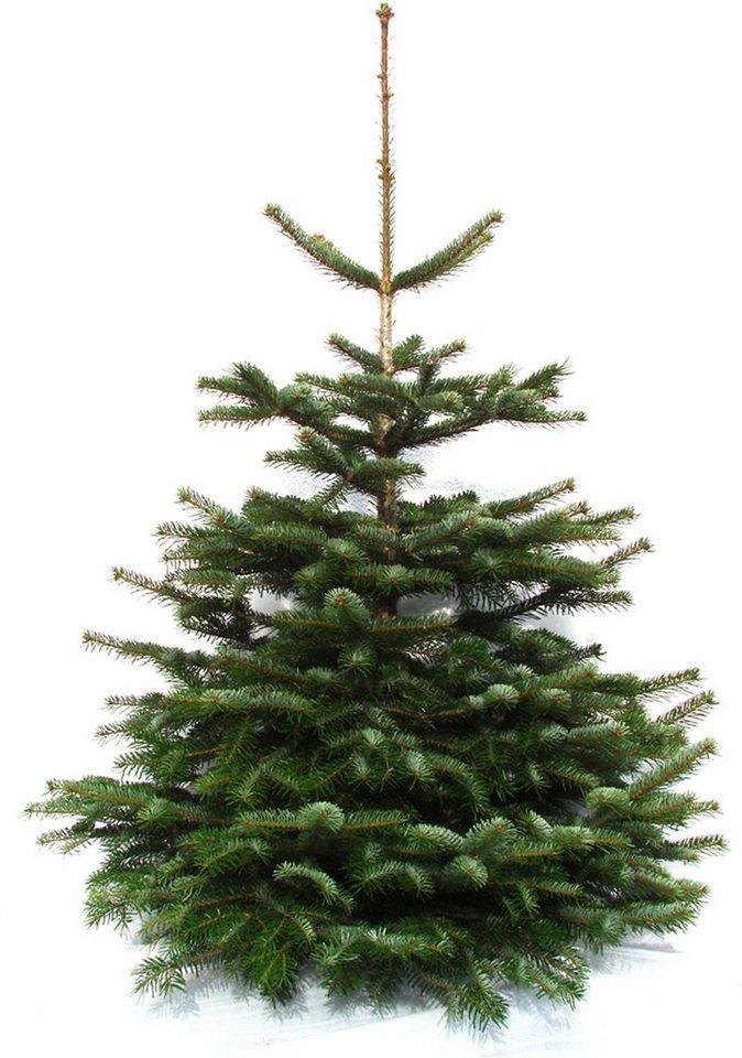 Weihnachtsbaum Herkunft.Weihnachtsbaumland Weihnachtsbaum Echte Premium Nordmanntanne Nordmanntanne Online Kaufen Otto