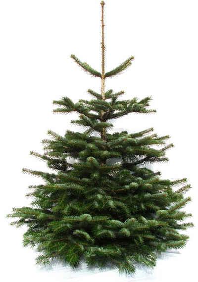 Weihnachtsbaumland Echter Weihnachtsbaum »Echte Premium-Nordmanntanne«, Nordmanntanne