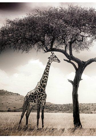 IDEALDECOR Fototapetas »Giraffen Safari« BlueBack...