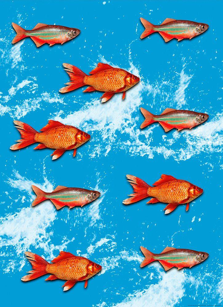 IDEALDECOR Fototapete »Goldfisch«, BlueBack, 2 Bahnen, 183 x 254 cm