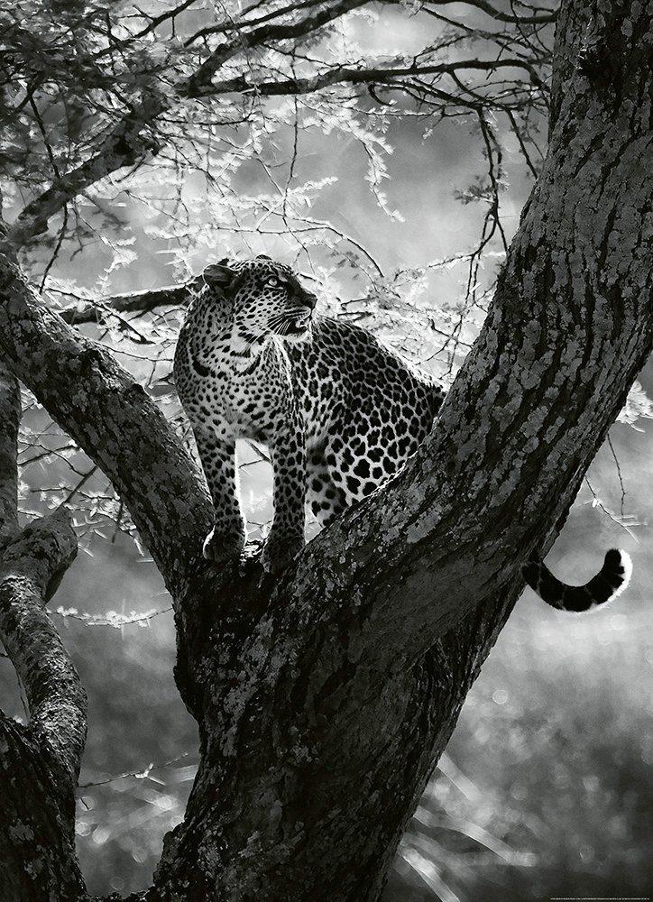 IDEALDECOR Fototapete »Leopard Baum«, Vlies, 2 Bahnen, 183 x 254 cm