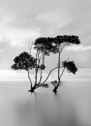 IDEALDECOR Fototapete »Bäume ruhigen Wasser«, BlueBack, 2 Bahnen, 183 x 254 cm